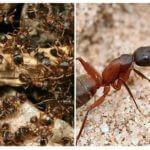 Bos rode mieren