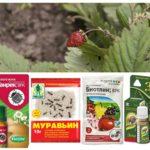 Ant-producten op aardbeien