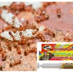 Remedy Great Ant Warrior