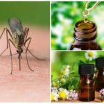Essentiële oliën van muggen