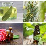 Essentiële oliën in de strijd tegen insecten