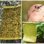 Kleverige insectenvallen