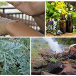 Essentiële oliën, alsem en gloeiende sparren kunnen muggen van de hand doen