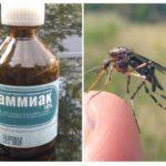 Ammoniak van muggen en muggen