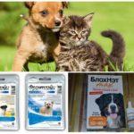 Voorbereidingen om de hond te beschermen tegen muggen