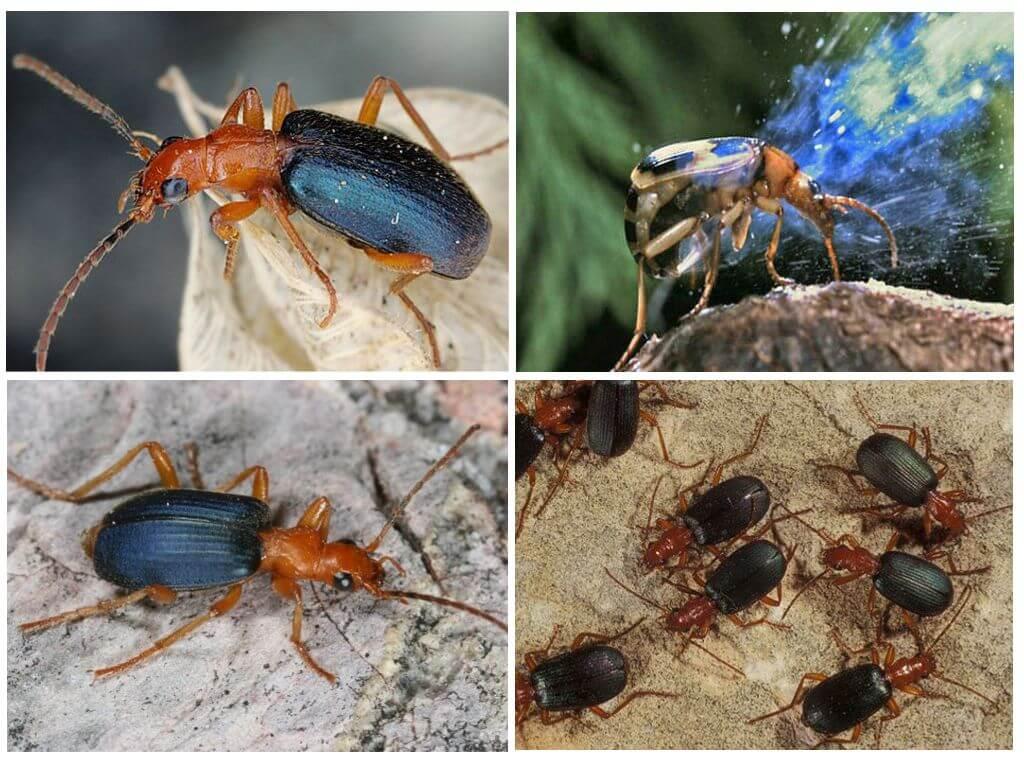 Beetle lifestyle
