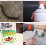 Bestrijding van insecten