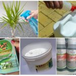 Pest Control Chemicals