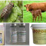 Dieren beschermen tegen de beten van bloedzuigende insecten