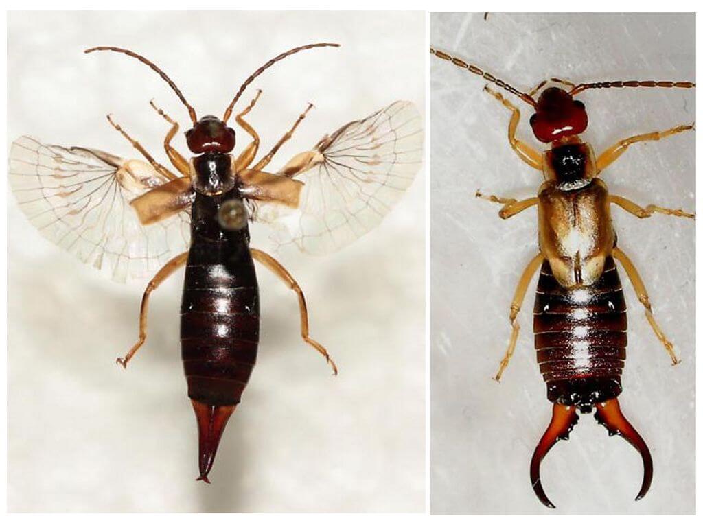 Het uiterlijk van het insect