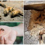 Bijen in een houten huis