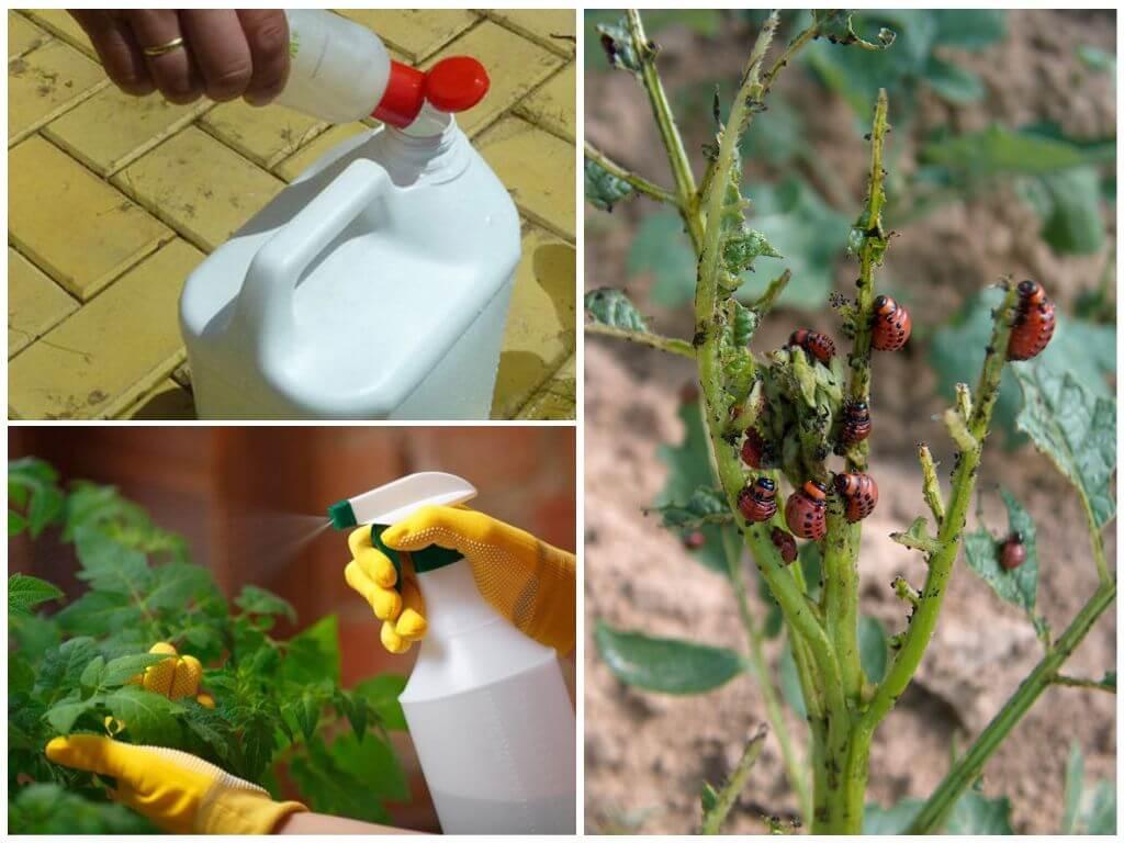 Chemicaliën tegen de coloradokever