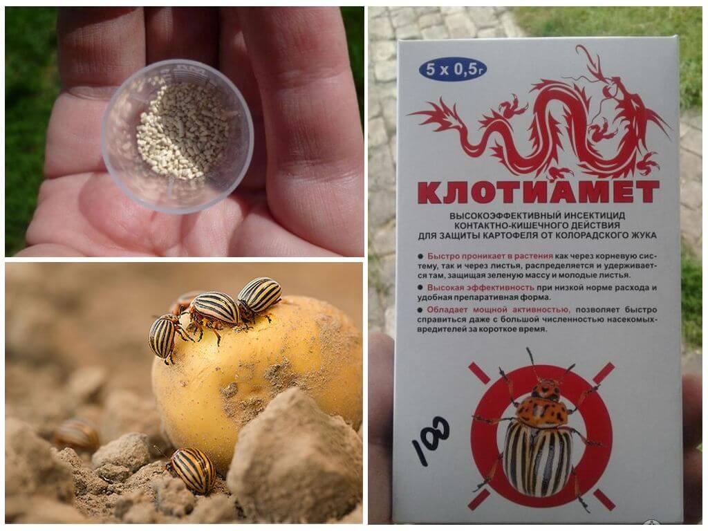Insecticide Clotiamete van de coloradokever