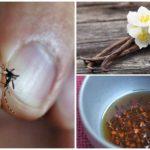 Folkmedicijnen om insecten te bestrijden