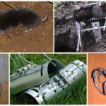 Rattenvallen en Mole Traps