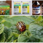 Methoden om bladkevers te behandelen