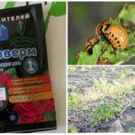 Toepassing van fyto-boerderij van coloradokevers
