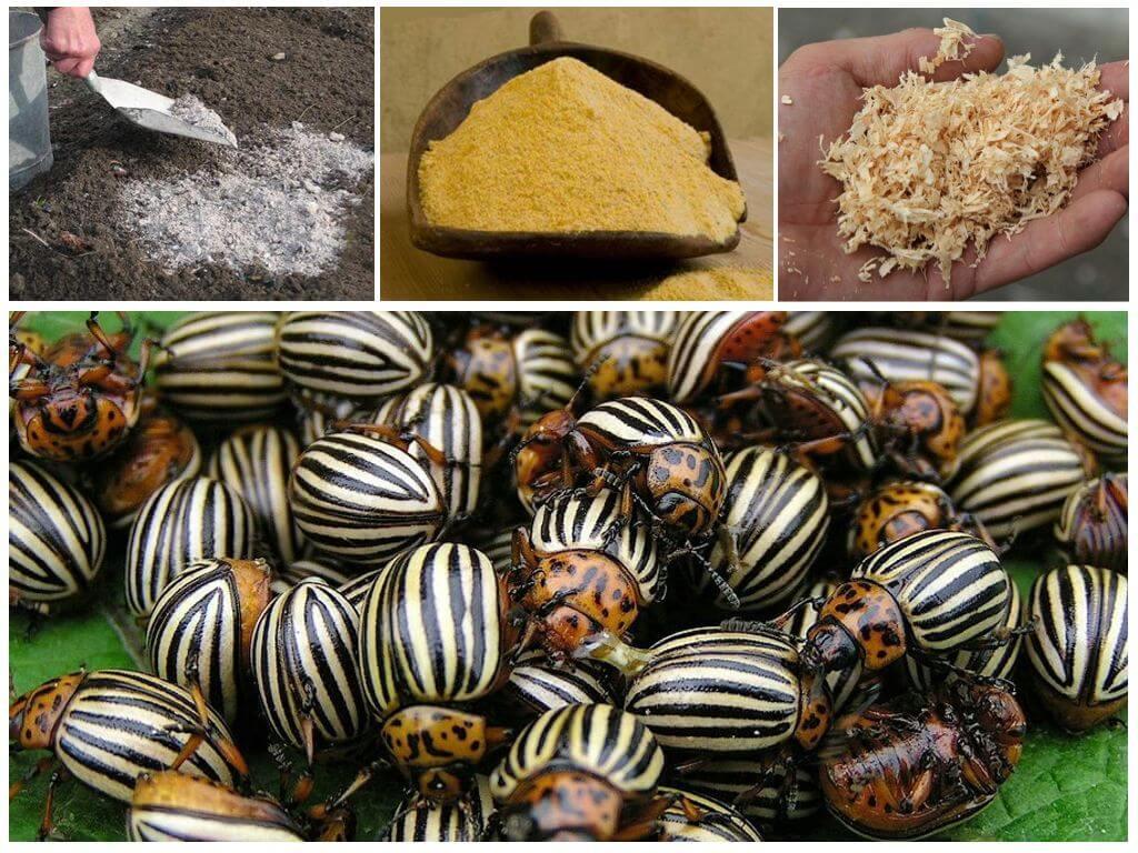 Middelen om aubergines af te stoffen van de coloradokever