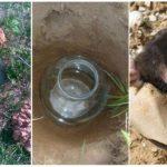 Mole capture-methoden
