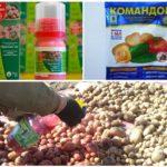 Preparaten voor de behandeling van aardappelzaden van de coloradokever