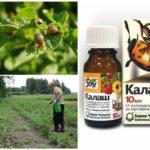 Het gebruik van de drug Kalash van de coloradokever