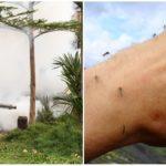Professionele behandeling van het grondgebied tegen muggen