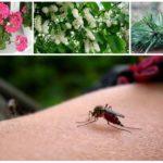 Volksmiddelen om muggen te bestrijden