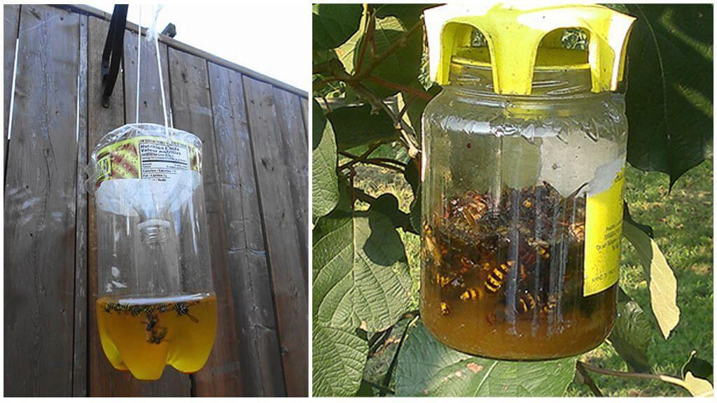 Val tegen hornets