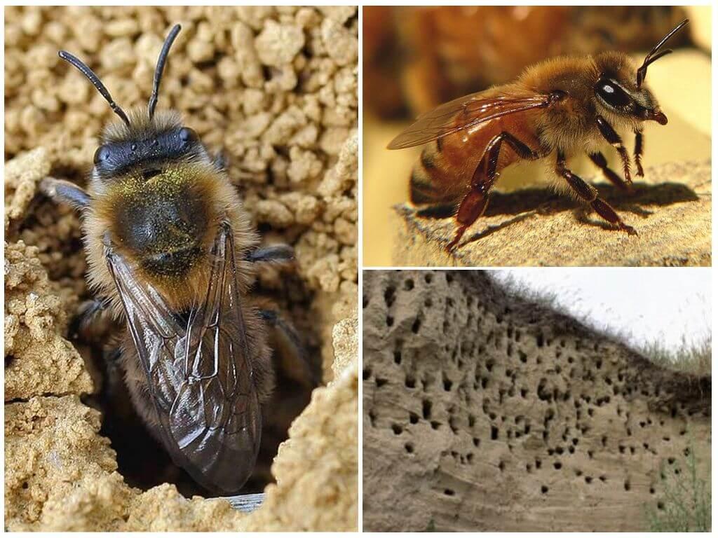 Aarde bijen
