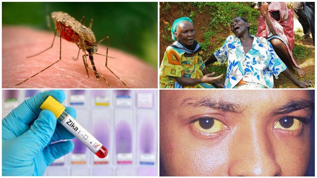 Zika-, West Nile- en Yellow Fever-virussen