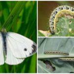Kool Caterpillar
