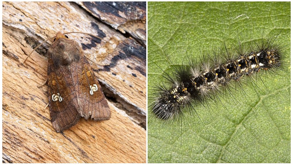 Vlinder en rupslepels