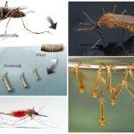 Mosquito fokken