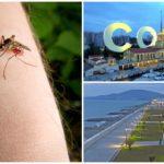 Muggen in Sotsji