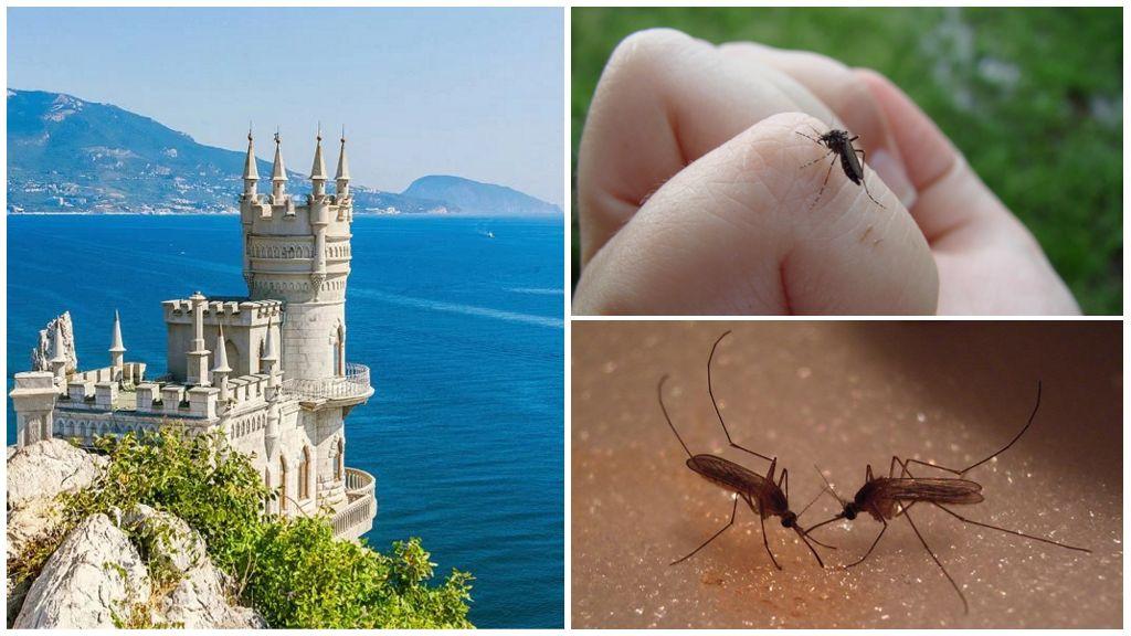 Muggen op de Krim
