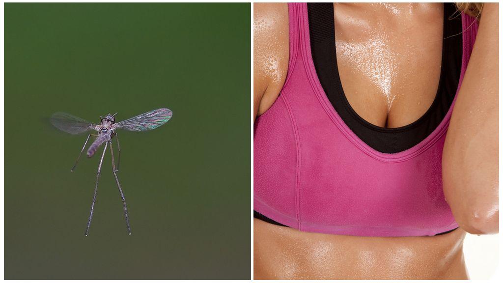 Muggen en de geur van zweet
