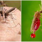 Vitale activiteit van een mug