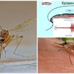 Mosquito structuur
