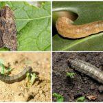 Caterpillars scoops