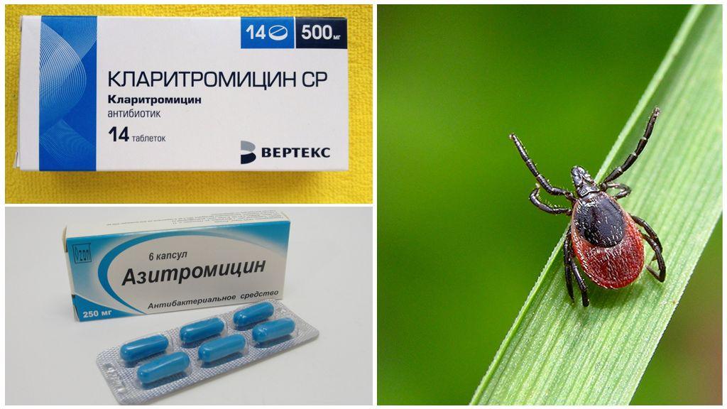 Antibiotica na een tekenbeet