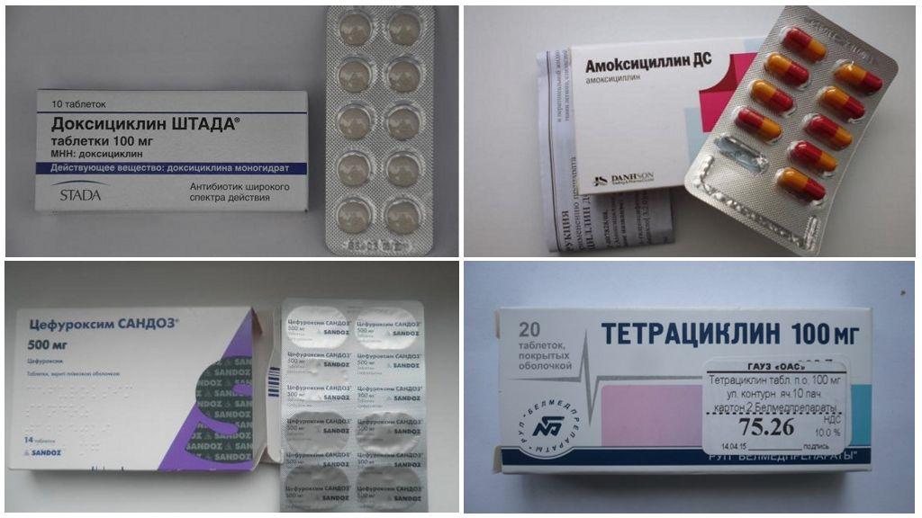Antibiotica voor Borreliose