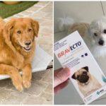 Tabletten van teken voor honden Bravekto