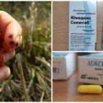 Het medicijn Doxycycline voor de preventie van tekenbeet