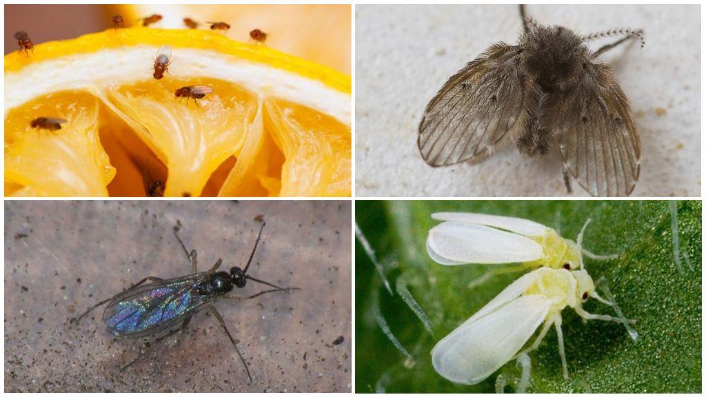 Soorten kleine insecten