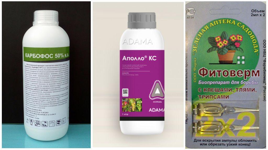 Insecticiden tegen spintmijten