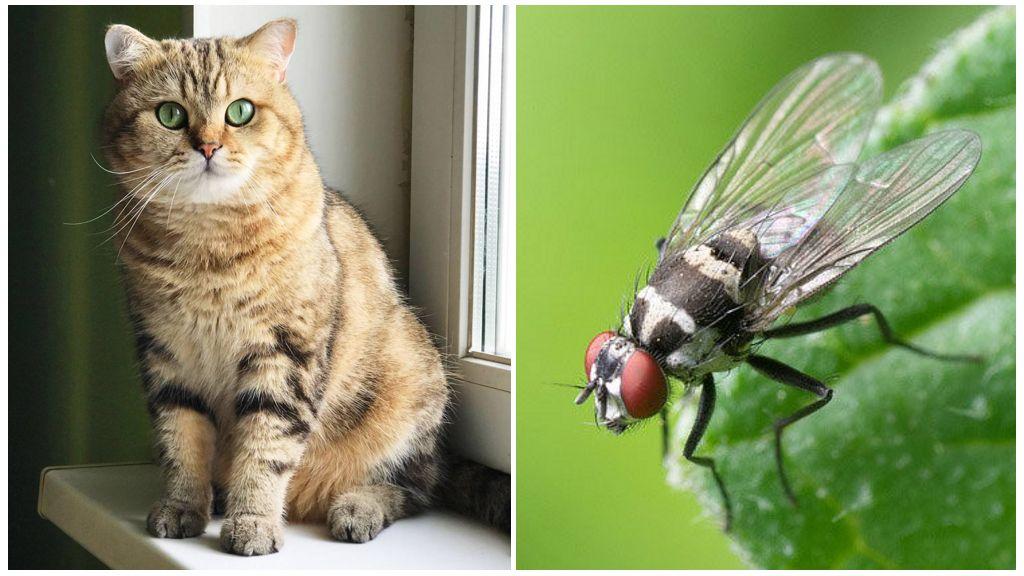 Kat en vlieg