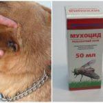 Vliegvlieg voor honden