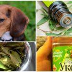 Gebruik van folk remedies voor honden