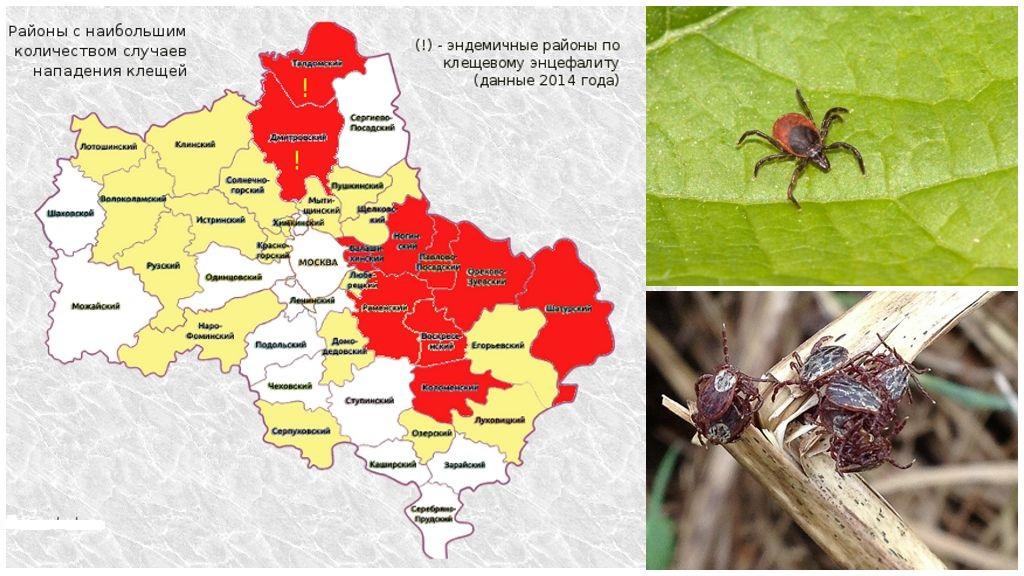 Gevaarlijke gebieden voor teken op de kaart van de regio Moskou