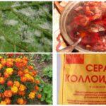 Traditionele methoden voor het omgaan met druivemijten